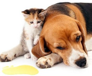 pet urine odour removal ottawa