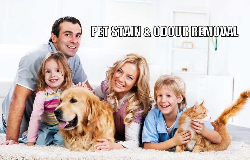 pet urine removal Ottawa